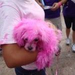 Susan G. Komen Breast Cancer Walk 21