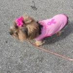 Susan G. Komen Breast Cancer Walk 10